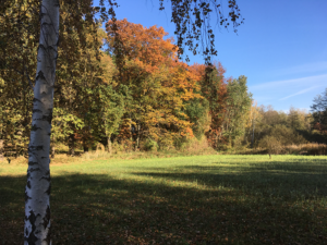 Herbstwiese im Naturschutzgebiet Linzer Wasser