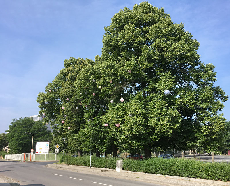 Ortrand, Baum am Kulturbahnhof